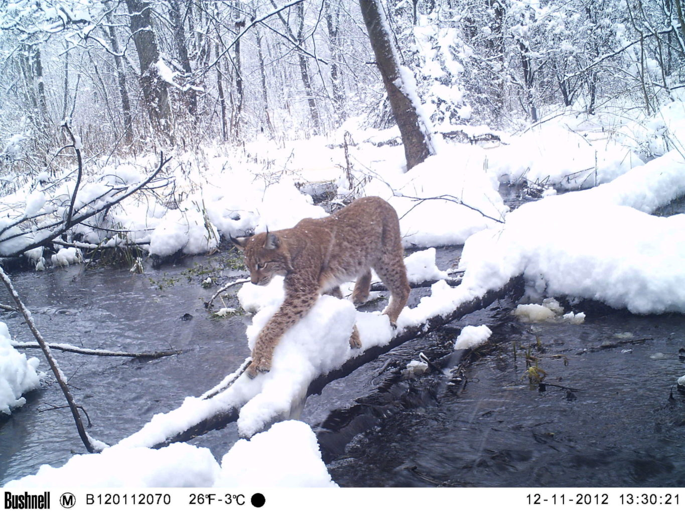 Cameras offer insights into Chernobyl's wildlife
