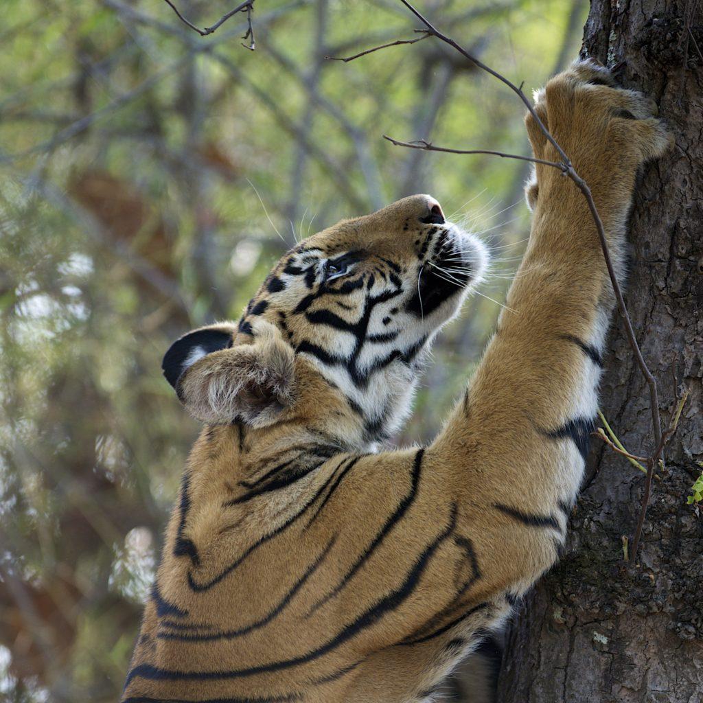 Life on the Brink: Wildlife of India and Amazonia