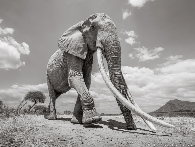 Will Burrard-Lucas: Land of Giants