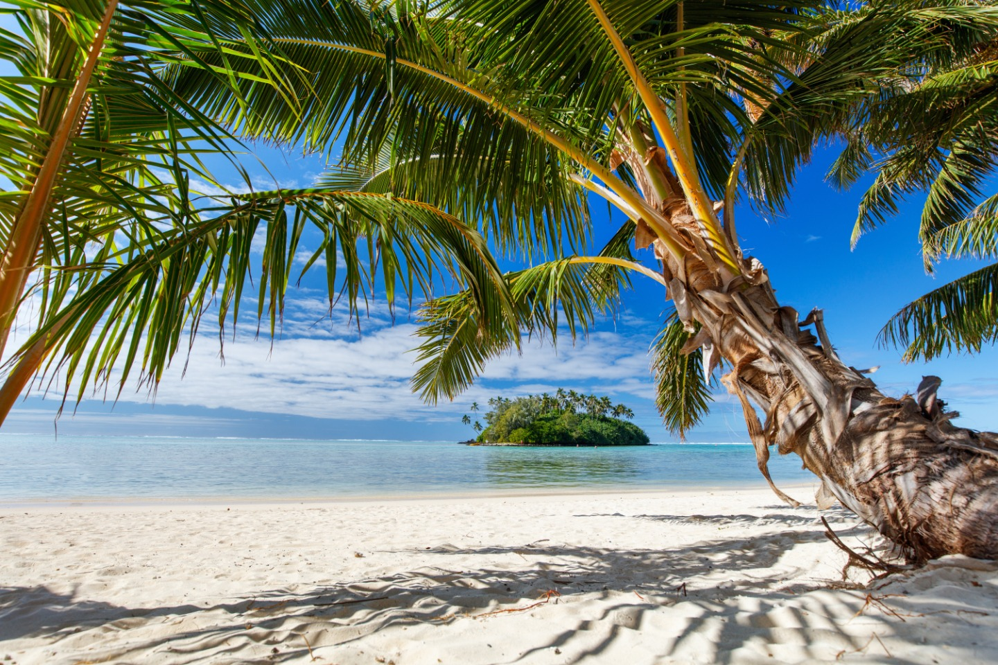 Beautiful tropical beach with palm trees, white sand,